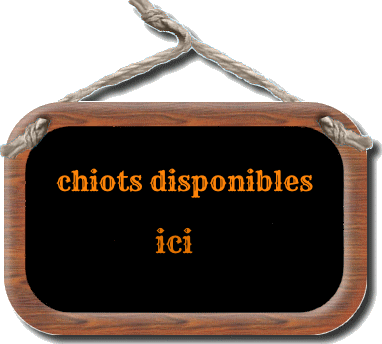 chiots-disponibles.png